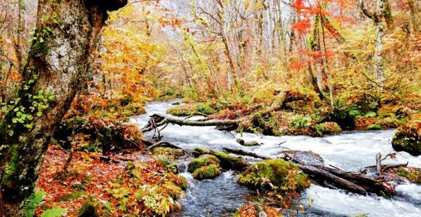 「奥入瀬渓流で紅葉と美味しい食事~秋の青森旅~後編」